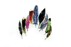 Iron-on transfer - thermo-printing - colorful feathers